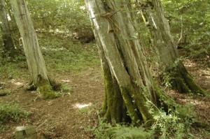 immersion-nature-arbres-eco-domaine-etrillet