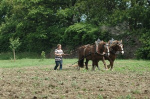 travail-cheval-demonstration-eco-domaine-etrillet