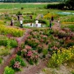 mandala-vegetal-eco-domaine