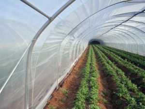 serre-agro-ecologie